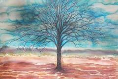 tree-in-the-desert